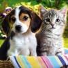 Прикольные фото животных. (19 фото)