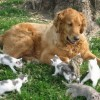 Прикольные фото животных. (25 фото)