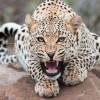 Красивые фото животных. (15 фото)