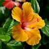 Фото красивых цветов. (22 фото)
