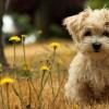 Красивые фото животных.  (21 фото)