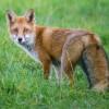 Красивые фото животных. (22 фото)