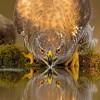 Красивые фото птиц. (19 фото)