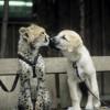 Красивые фото животных.  (25 фото)
