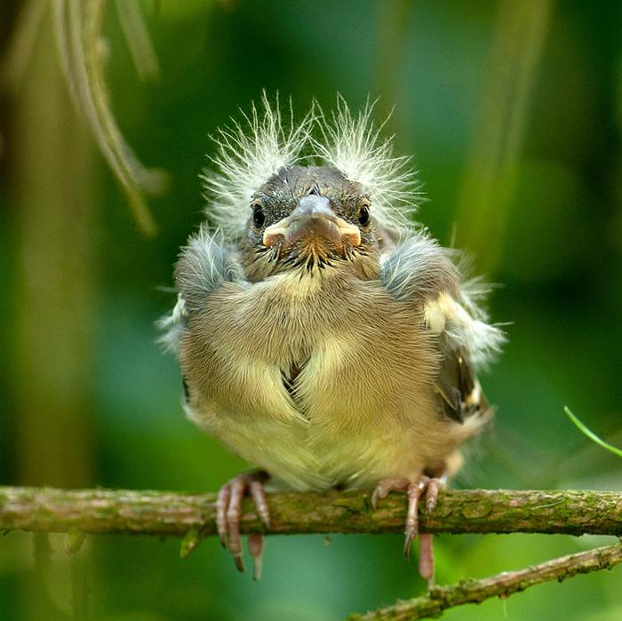 Дня, картинки птички приколы