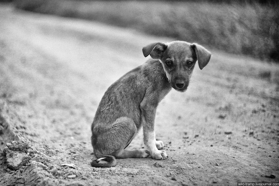 Открытка, прикольные картинки бездомных собак