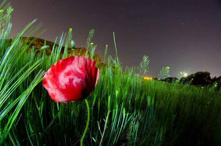 фото, природа,красивые фото природы, фотопейзажи (5)
