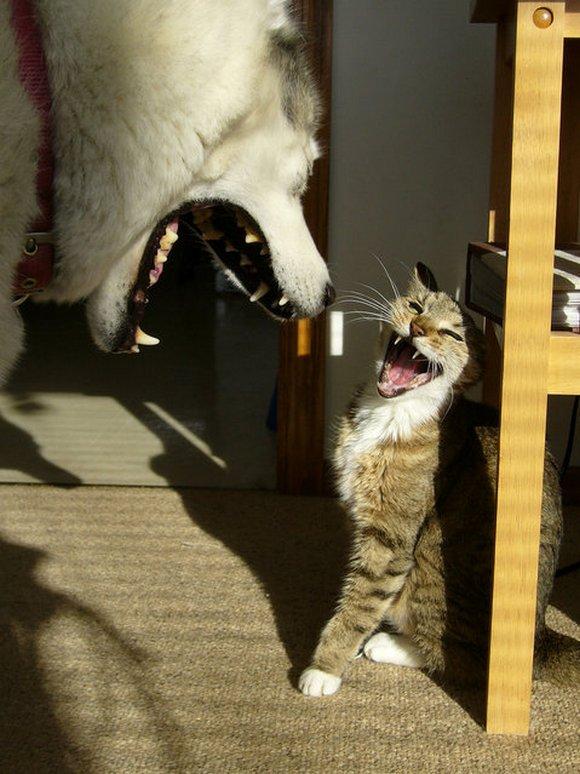 Прикольные фото животных. (4)