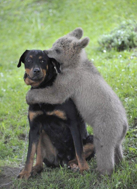 Прикольные фото животных. (20)