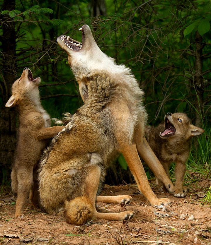 Прикольные фото животных. (9)