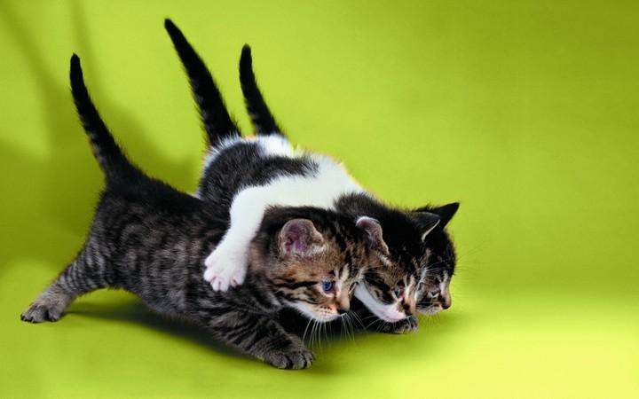 прикольные фото животных (2)