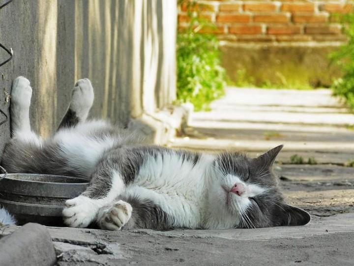 прикольные фото животных (3)