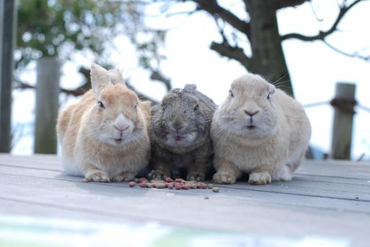 Прикольные фото животных. (7)