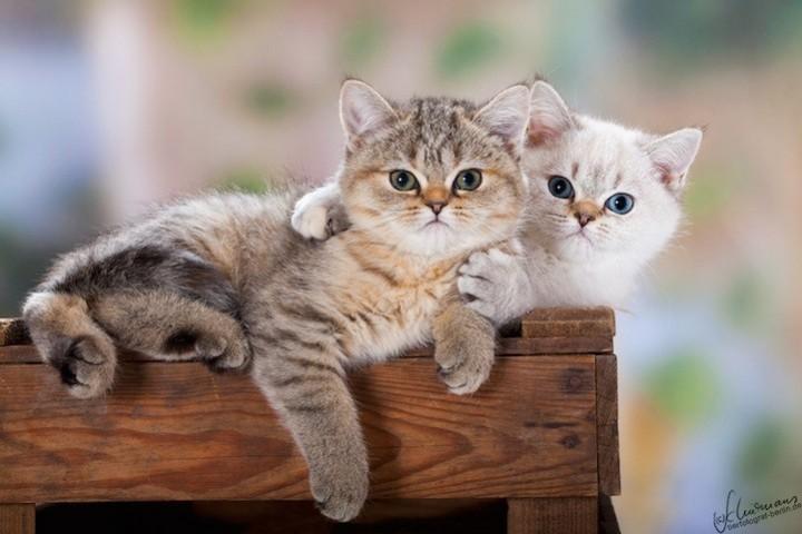 Прикольные фото животных. (5)