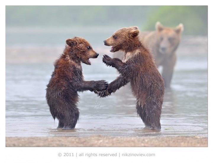 Прикольные фото животных. (15)
