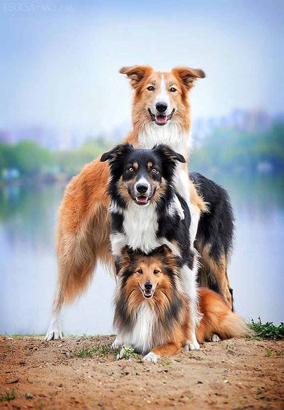 Прикольные фото животных. (3)