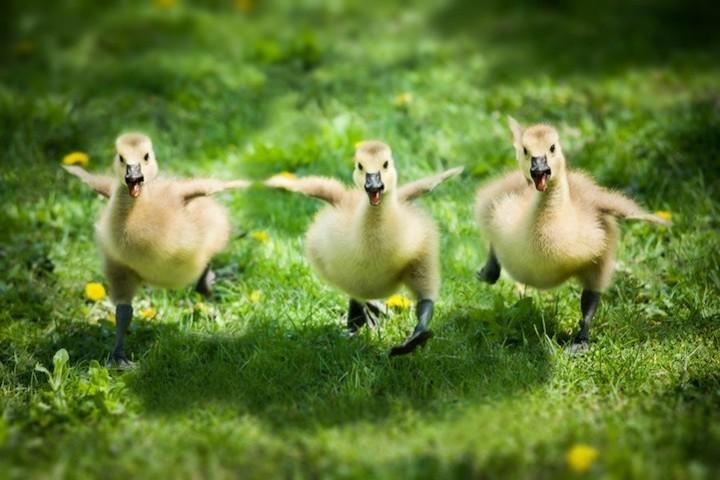 Прикольные фото животных. (1)