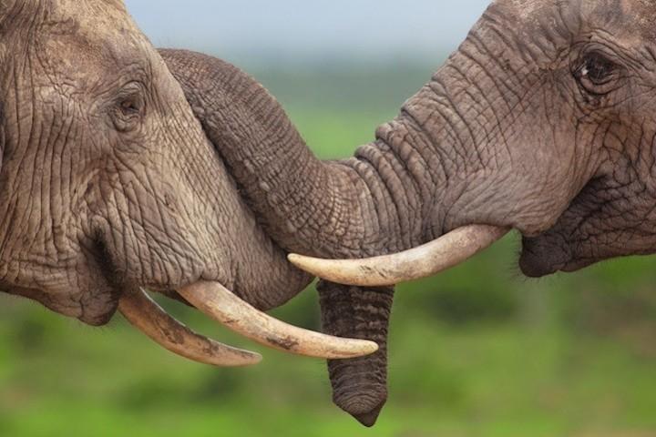 Прикольные фото животных. (19)