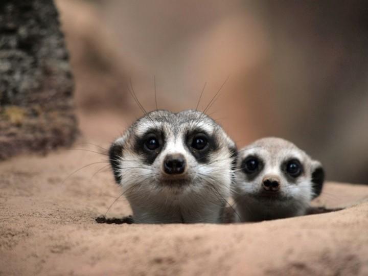 Прикольные фото животных. (10)