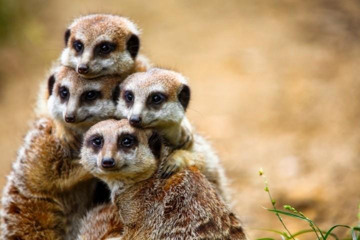 Прикольные фото животных. (11)