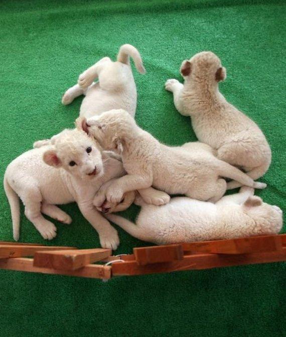 прикольные фото животных (17)