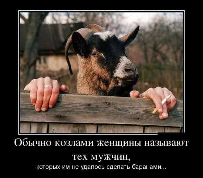 Демотиваторы. (2)