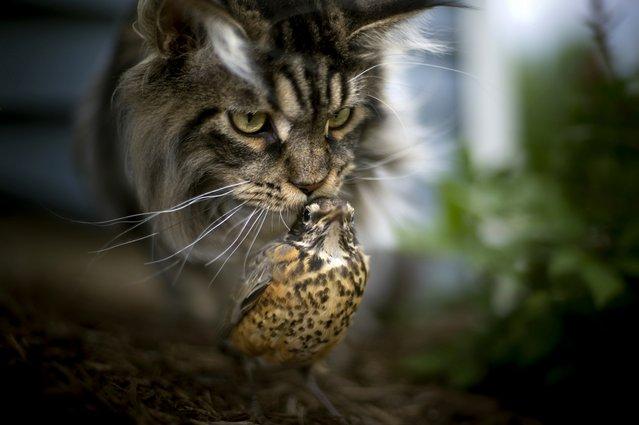 фото, животные, прикольные фото животных (4)