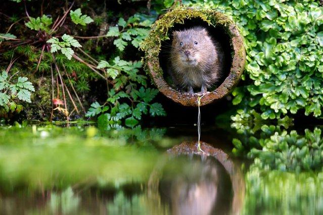 фото, животные, прикольные фото животных (12)