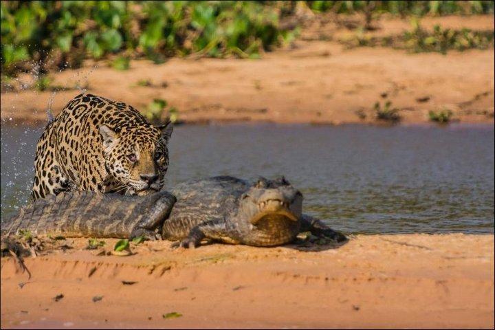 фото, животные, необычное (3)