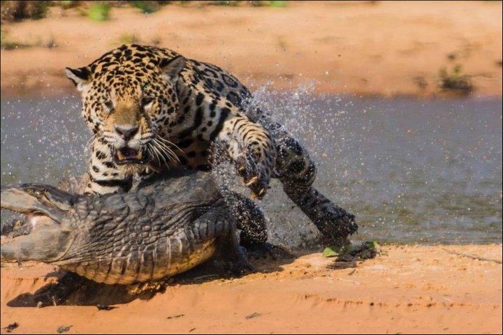 фото, животные, необычное (4)