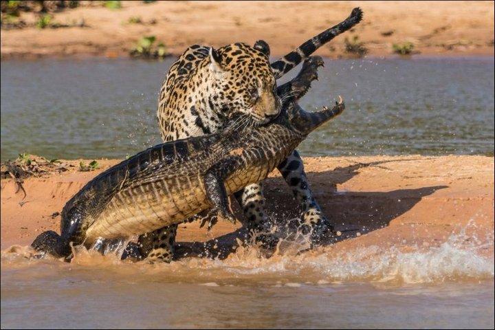 фото, животные, необычное (5)