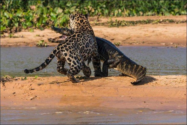 фото, животные, необычное (7)