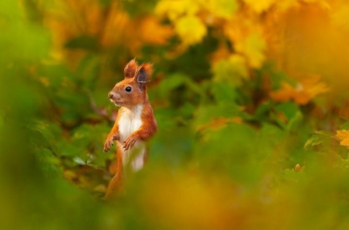 фото, природа, красивые фото природы, фотопейзажи, осень (5)