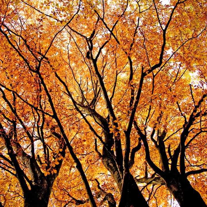 фото, природа,красивые фото природы, фотопейзажи (3)