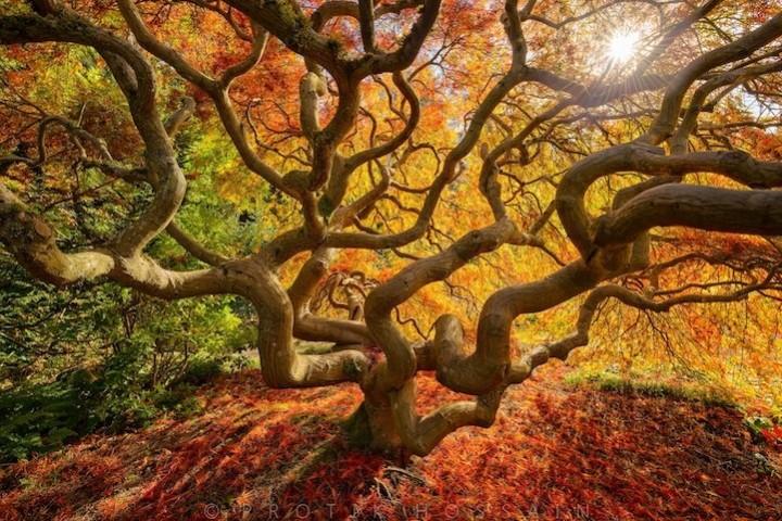 фото, природа,красивые фото природы, фотопейзажи (2)