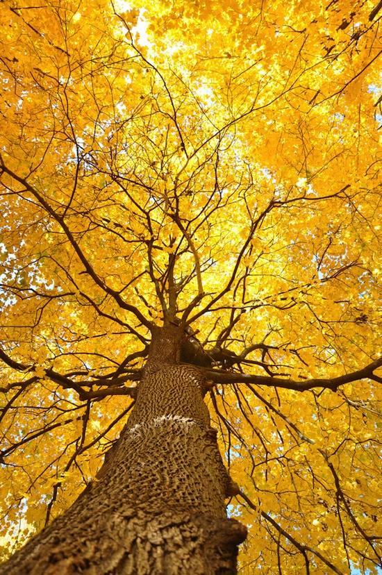 фото, природа,красивые фото природы, фотопейзажи (4)