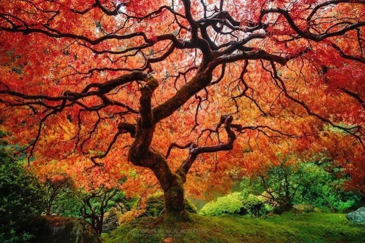 фото, природа,красивые фото природы, фотопейзажи (7)