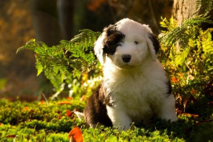 фото, животные, прикольные фото животных (7)