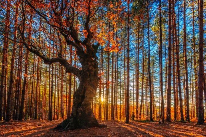 фото, природа,красивые фото природы, фотопейзажи (8)