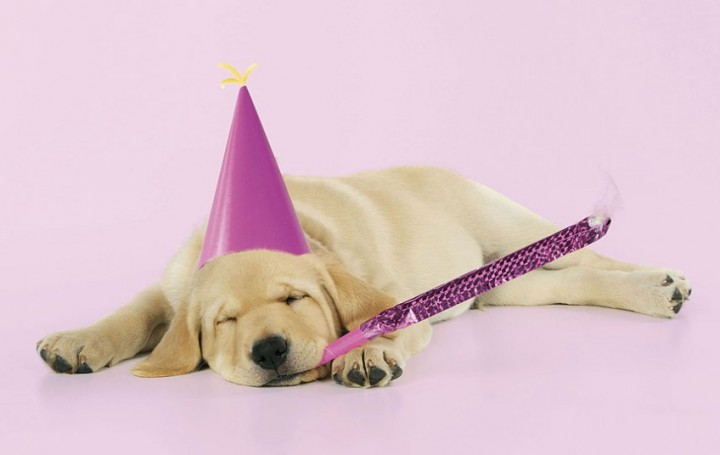 Собаки в шляпах (11)