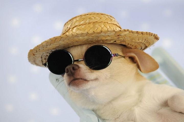Собаки в шляпах (10)