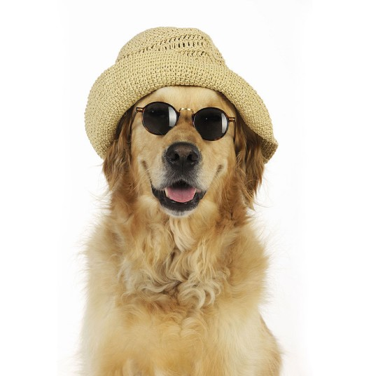 Собаки в шляпах (9)