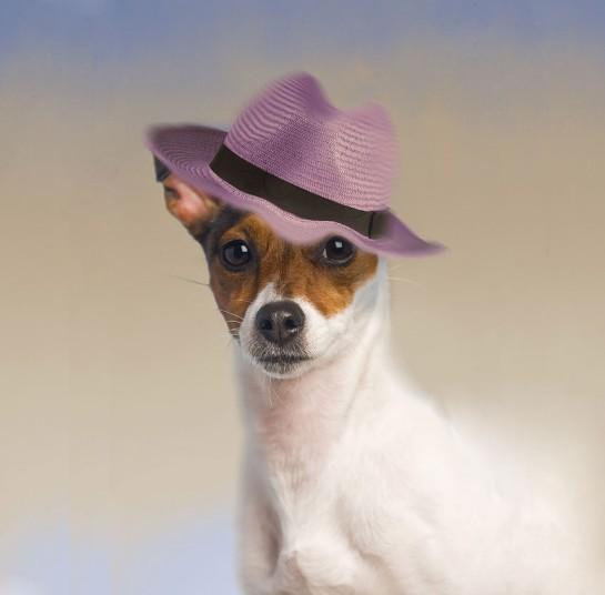 Собаки в шляпах (8)