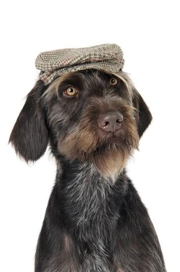 Собаки в шляпах (6)