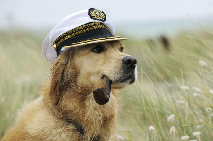 Собаки в шляпах (1)