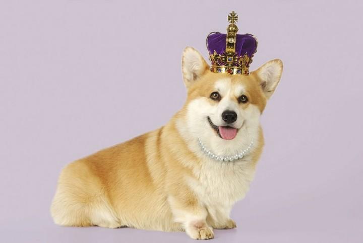 Собаки в шляпах (3)