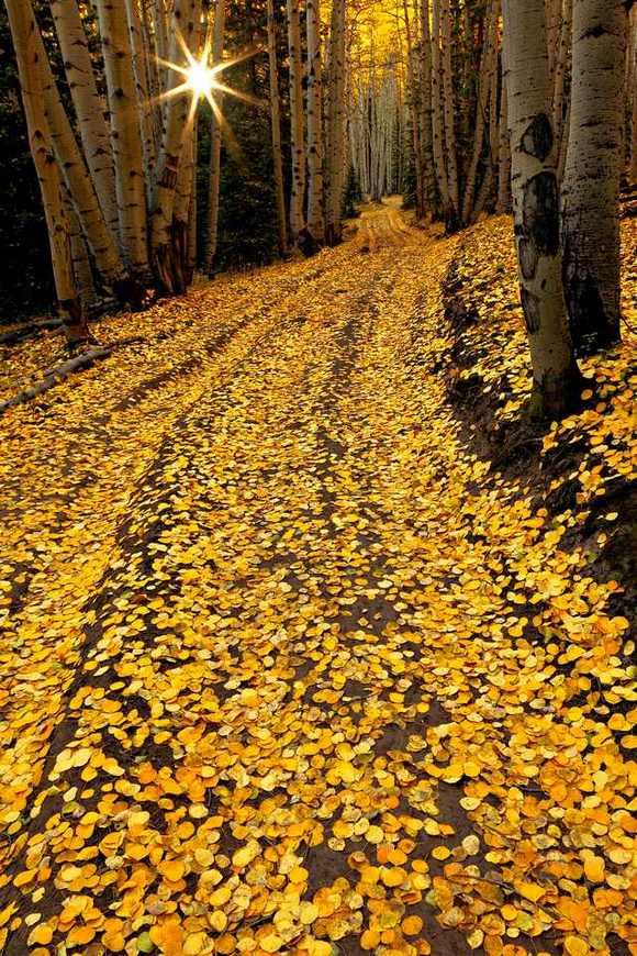 фото, природа, красивые фото природы, фотопейзажи, осень (6)