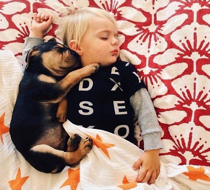фото, дети, животные (4)