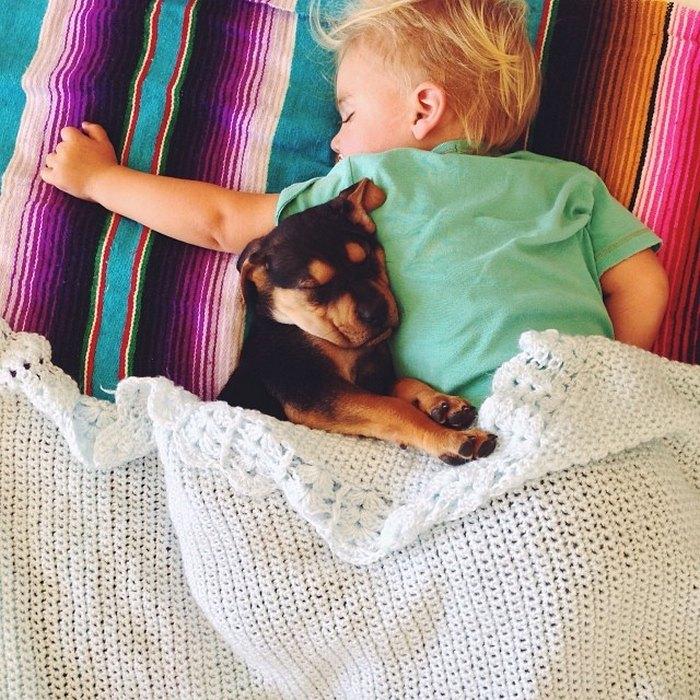 фото, дети, животные (9)