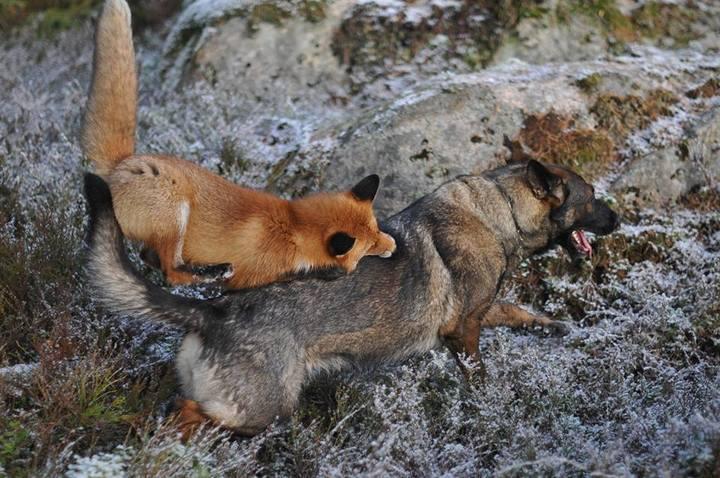 фото, животные, необычная дружба (4)